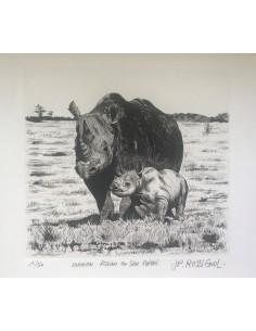 Rhino et son bébé
